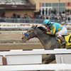 El Kabeir wins the 2015 Gotham Stakes at Aqueduct. <br /> Coglianese Photos/Joe Labozzetta