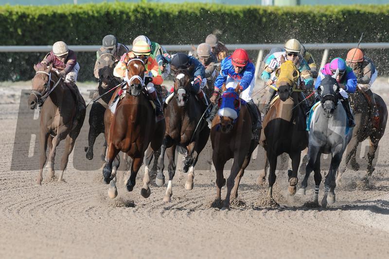 Dame Dorothy wins the 2015 Florida Sunshine Millions Distaff Stakes.<br /> Coglianese Photos/Leslie Martin