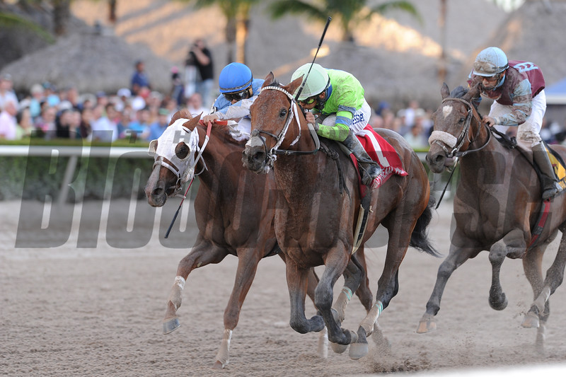 Sr. Quisqueyano wins the 2015 Florida Sunshine Millions Classic Stakes<br /> Coglianese Photos/Kenny Martin