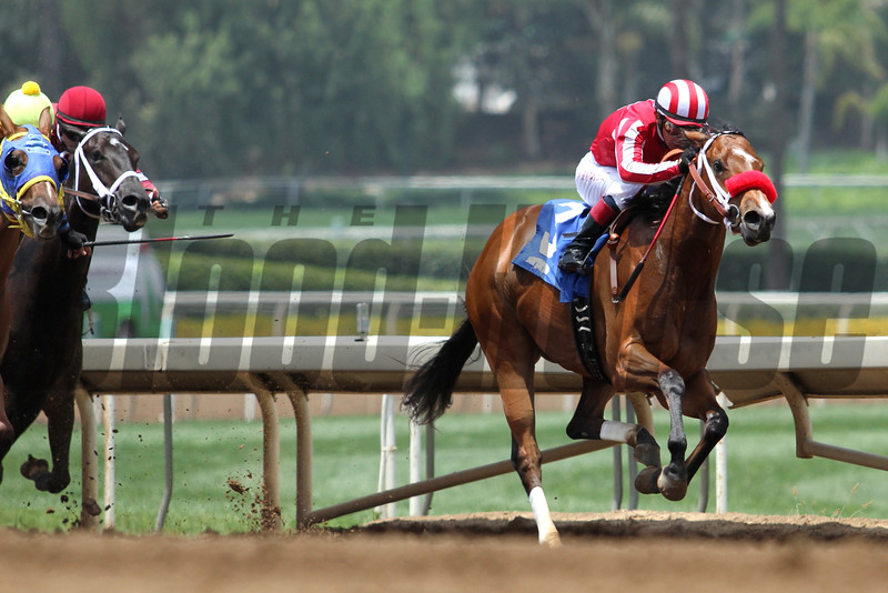 STAR OF MUNSTER and Fernando Perez win a MSW for two-year-old fillies for trainer Robertino Diodoro at Santa Anita 05.30.15. Photo by Helen Solomon