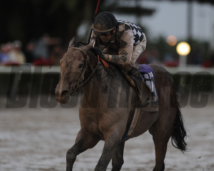 Key to Power wins the 2015 Claiming Crown Emerald Stakes.<br /> Coglianese Photos/Kenny Martin