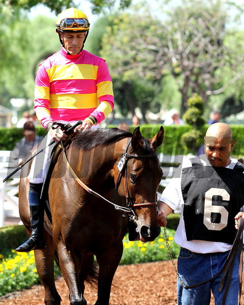 SUDDEN FAME debuts in the silks of Ramona Bass, ridden by Gary Stevens, in a MSW for two-year-old fillies (race#2) at Santa Anita 09.26.15. Photo: Helen Solomon