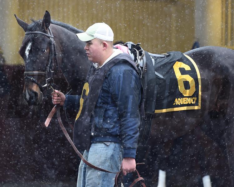 Condo Commando wins the 2015 Busher Stakes.<br /> Coglianese Photos/Susie Raisher