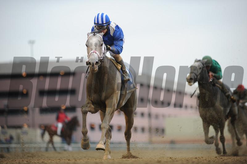 Mohaymen wins the 2015 Remsen Stakes.<br /> Coglianese Photos