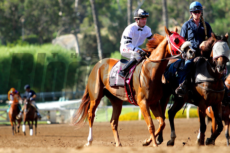 WARREN'S VENEDA and Tyler Baze go to post, with Beholder looming in the background, for the G1 Zenyatta Stakes at Santa Anita 09.26.15. Photo: Helen Solomon