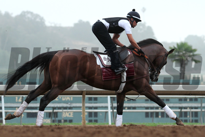 Runner-up in the 2015 Kentucky Derby, FIRING LINE is back at Santa Anita 05.30.15. Photo by Helen Solomon