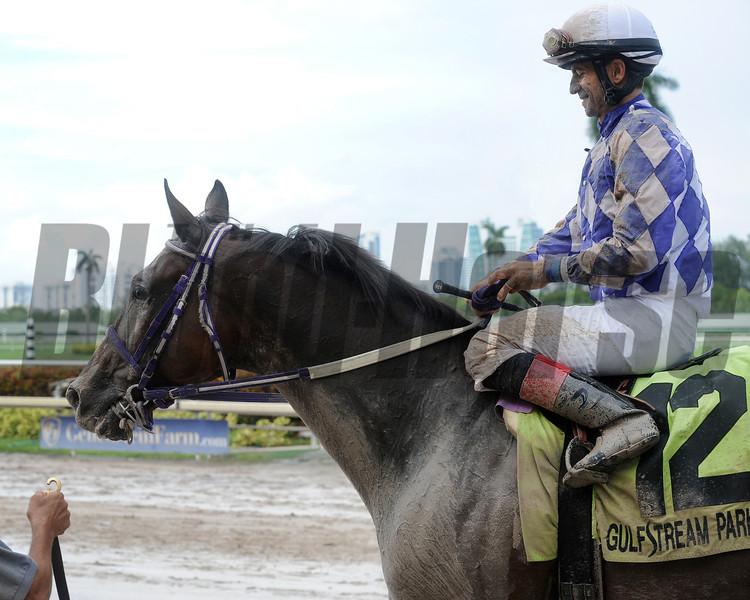 Johnny Handsome wins the 2015 The Vid Stakes.<br /> Coglianese Photos/Lauren King