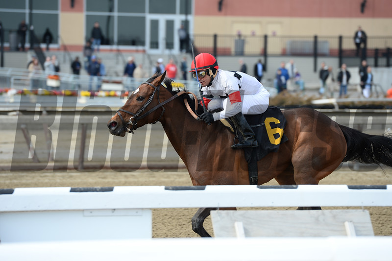 Room for Me wins the 2015 Videogenic Stakes.<br /> Coglianese Photos