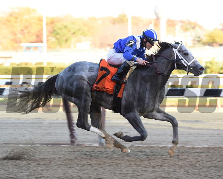 Mohaymen wins the 2015 Nashua Stakes.<br /> Coglianese Photos
