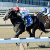 Willet wins the 2015 Interborough Stakes at Aqueduct.<br /> Coglianese Photos/Joe Labozzetta