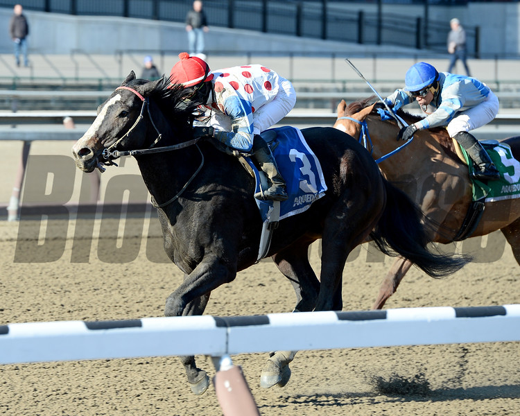 Willet wins the 2015 Interborough Stakes at Aqueduct.<br /> Coglianese Photos/Joe Labozzetta