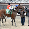 Salutos Amigos wins the 2015 Toboggan Stakes at Aqueduct.<br /> Coglianese Photos/Joe Labozzetta