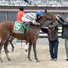 Salutos Amigos wins the 2015 Toboggan Stakes at Aqueduct.<br /> Coglianese Photos/Joe Labozzetta