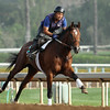 Morning workouts at Santa Anita 05.30.15. Photo by Helen Solomon