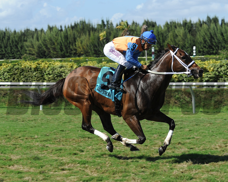 Jewel of a Cat shines in the Millions Turf Sprint Preview Stakes at Gulfstream Park West.<br /> Coglianese Photo
