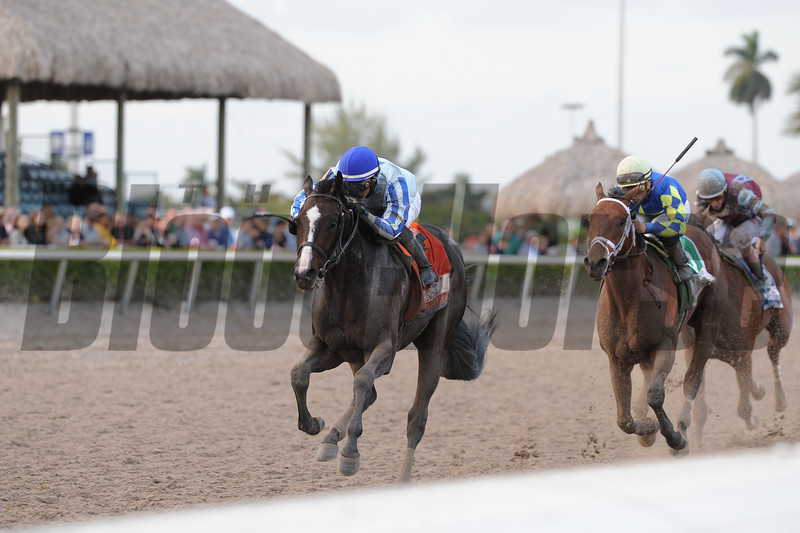 Itsaknockout (right) wins the 2015 Fountain of Youth via DQ.<br /> Coglianese Photos/Kenny Martin