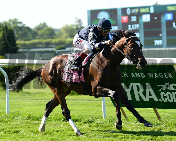 A Lot is victorious in the Paradise Creek Stakes at Belmont Park.