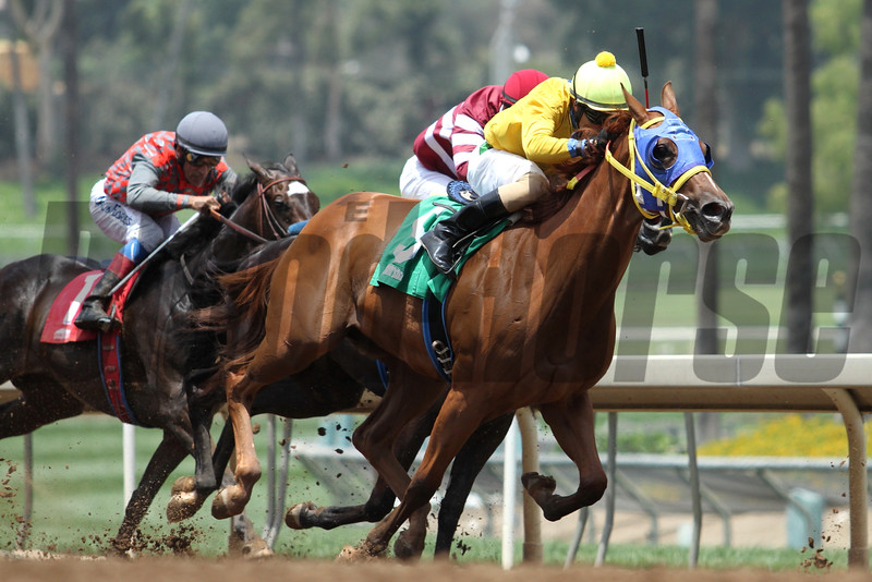 AIMING STRAIGHT and Martin Pedroza finish second in a MSW for two-year-old fillies at Santa Anita 05.30.15. Photo by Helen Solomon