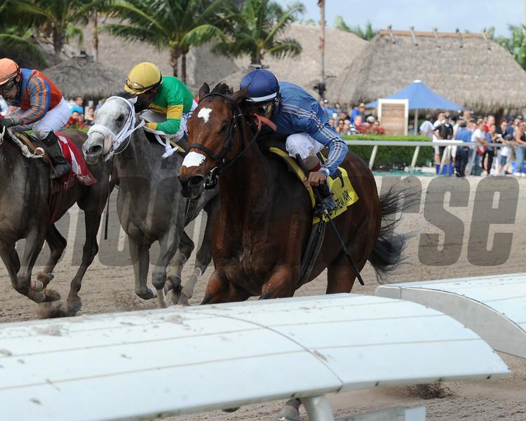 Best Behavior wins the Sugar Swirl Stakes Dec. 26, 2015<br /> Coglianese Photo/Kenny Martin