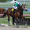 Materiality wins the 2015 Islamorada Handicap.<br /> Coglianese Photos/Kenny Martin