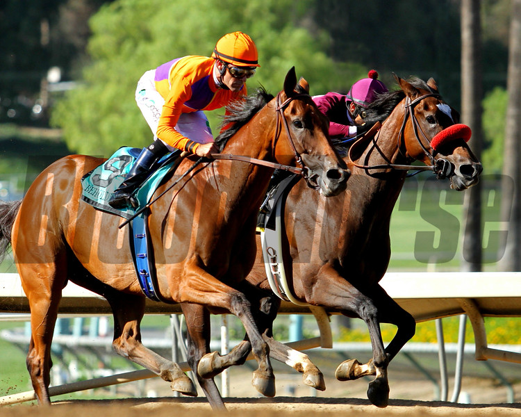 BEHOLDER, ridden by Gary Stevens, wins her third consecutive G1 ZENYATTA STAKES, with MY SWEET ADDICTION and Mike Smith second, at Santa Anita 09.26.15. Photo: Helen Solomon