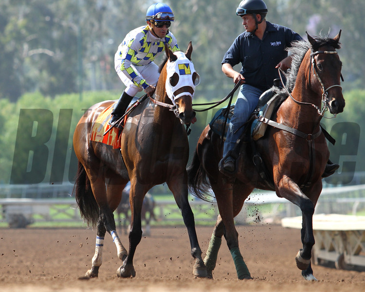 MORENO ridden by east coast jockey Cornelio Velasquez in the G2 Californian Stakes at Santa Anita 05.30.15. Photo by Helen Solomon