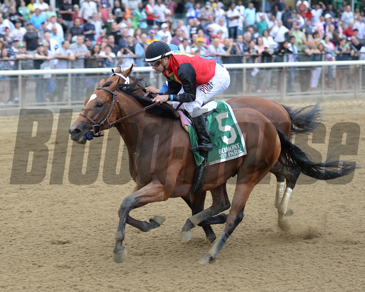 A. P. Indian wins the 2016 Belmont Sprint Championship<br /> Coglianese Photos/Chelsea Durand
