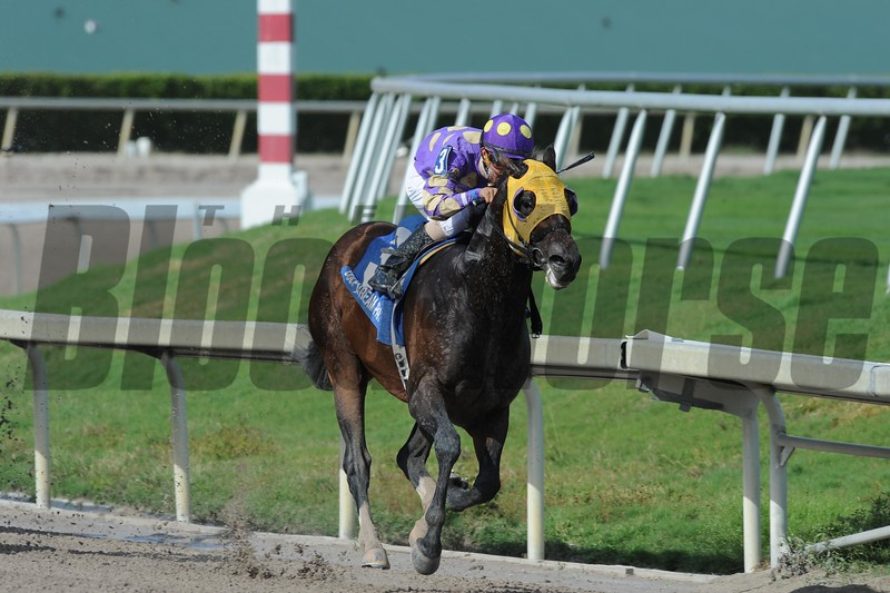 Grande Shores wins the 2016 Sir Shackleton Stakes.<br /> Coglianese Photos