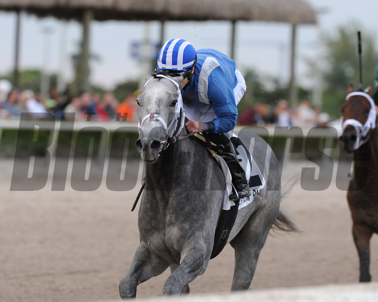 Mohaymen wins the 2016 Holy Bull Stakes.<br /> Coglianese Photos