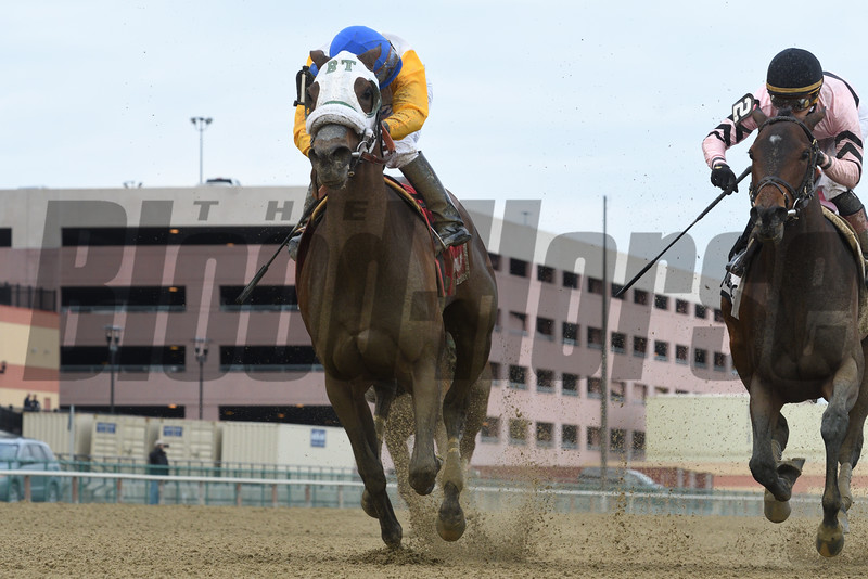 Verve's Tale wins the 2016 Comely Stakes<br /> Coglianese Photos