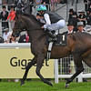 Miss Temple City fourth in the Duke of Cambridge Stakes<br /> Royal Ascot, UK <br /> 6/15/16<br /> Mathea Kelley