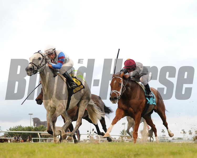 Neck of the Moon wins the 2016 South Beach Stakes<br /> Coglianese Photos/Leslie Martin