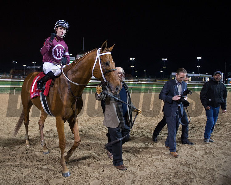 Caption: David Fiske with Winchell Thoroughbreds walks in Gun Runner to winner circle.<br /> Gun Runner with Florent Geroux wins Clark Handicap (gr. I) on Nov. 25, 2016, at Churchill Downs.<br /> Anne M. Eberhardt Photo