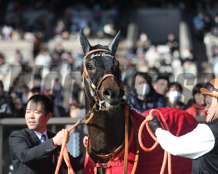 Gold Dream (JPN) wins the Hyacinth Stakes<br /> Masakazu Takahashi Photo