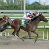 Dude Fantasy wins the Florida Sire My Dear Girl Stakes Division<br /> Coglianese Photos/Leslie Martin