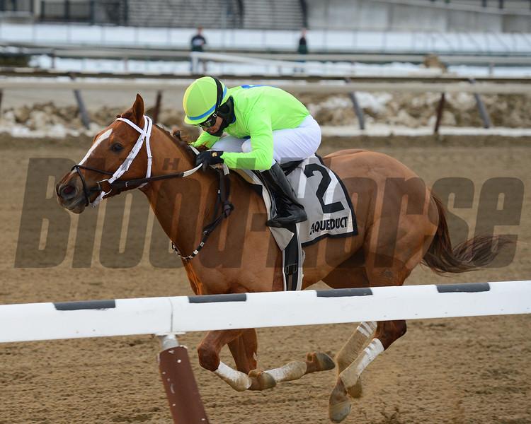War Story wins the 2016 Queens County Stakes.<br /> Coglianese Photos/Joe Labozzetta