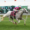 Tapitation wins the Kingston Stakes at Belmont Park May 30, 2016<br /> Coglianese Photos