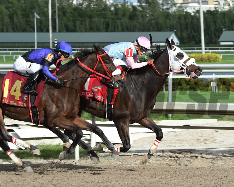 Chepstow wins the 2016 Claiming Crown Iron Horse<br /> Coglianese Photos/Leslie Martin