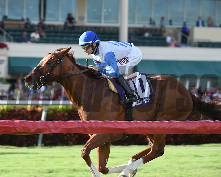 Giant Run wins the 2016 Tropical Park Derby<br /> Coglianese Photos/Kenny Martin