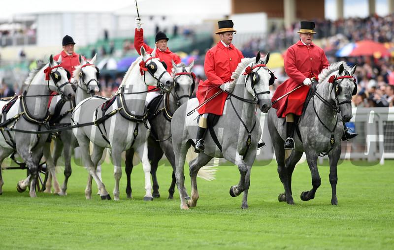 Queen's Horses at Royal Ascot