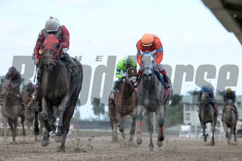 Tormenta de Oro wins the 2016 Claiming Crown Glass Slipper Stakes<br /> Coglianese Photos