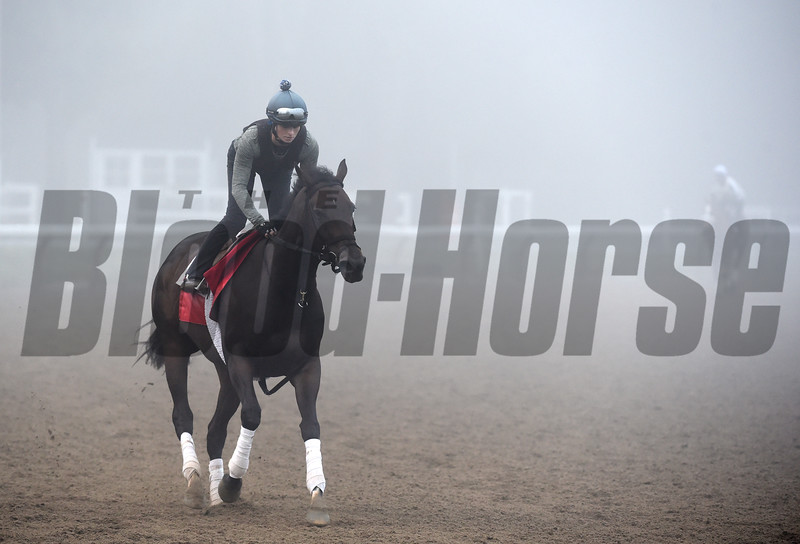 Champion Turf Filly Tepin goes out in thick fog for exercise this morning Sunday July 24 2016 at the Saratoga Race Course in Saratoga Springs, N.Y. Tepin is owned by Robert E. Masterson and trained by Mark Casse.  Her sire is Bernstein and her dam is Life Happened. (Skip Dickstein