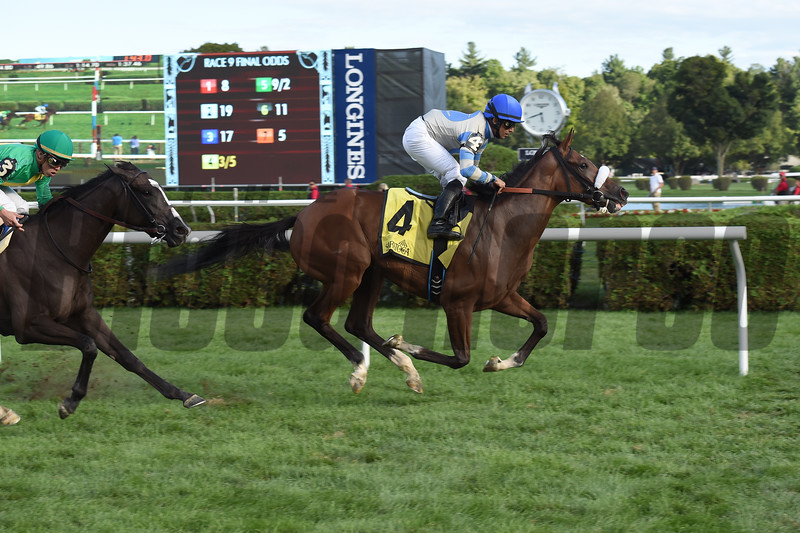 Coasted wins the 2016 P. G. Johnson Stakes<br /> Coglianese Photos
