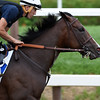 Songbird with exercise rider Edgar Rodriguez puts in her final work Monday Aug. 15, 2016 at the Saratoga Race Course in Saratoga Springs, N.Y.  for Saturday's Alabama Stakes.  Photo by Skip Dickstein