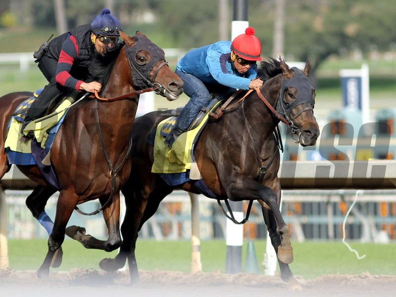 TOEWS ON ICE and Martin Garcia working in company with UNDENIABLE U at Santa Anita 01.09.16.  Photo: HELEN SOLOMON