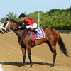 Louisville First wins the New York Stallion Stakes June 26, 2016.<br /> Coglianese Photos
