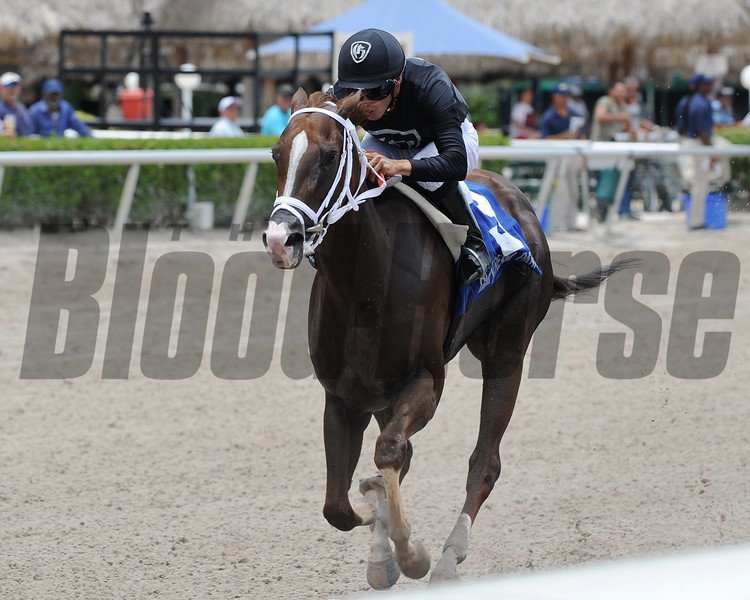 Dearest wins the 2016 Azalea Stakes.<br /> Coglianese Photos