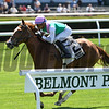 Suffused wins the 2016 Belmont Coronation Invitational.<br /> Conglianese Photos/Chelsea Durand