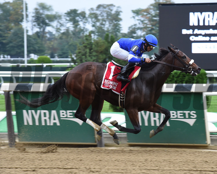 Filibustin wins the 2016 Joseph A. Gimma Stakes.<br /> Coglianese Photos