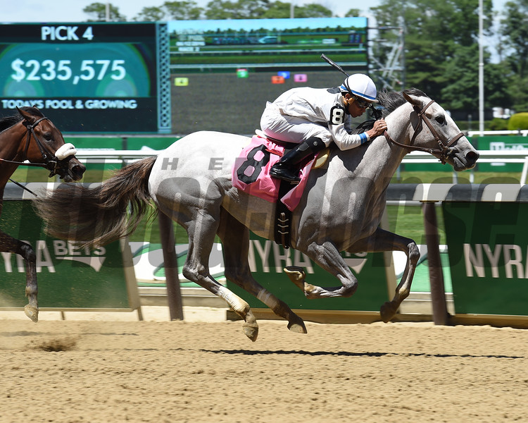 Platinum Spark - Maiden Win, Belmont Park, June 12, 2016<br /> Coglianese Photos